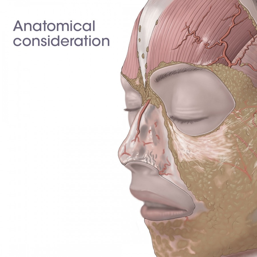 anatomical consideration